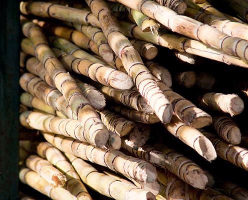 Big pile of sugar canes. Photo.