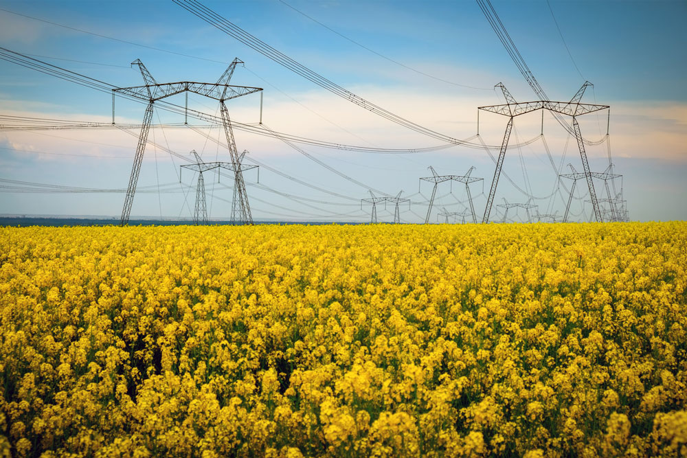 Power lines in a yellow field. Photo.
